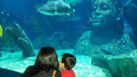 Photo of SEA LIFE Bangkok Ocean World -- highly ranked.