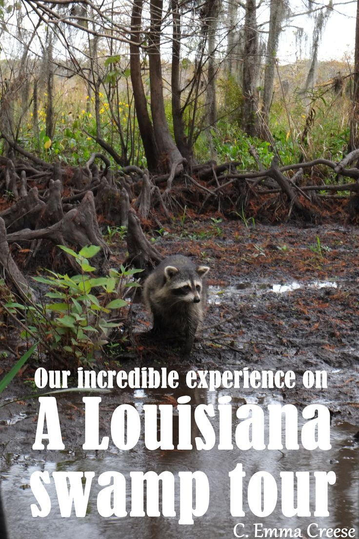 We had an incredible experience on our Louisiana Swamp tour - cruising the Bayou and spotting native wildlife was amazing.