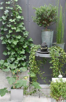 Purple Area - garden
