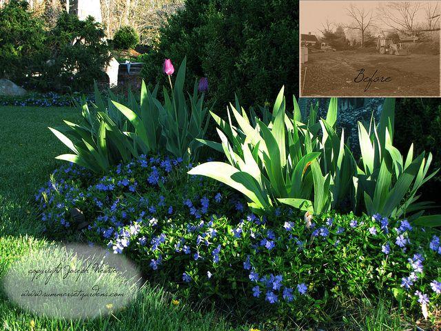 25+ Best Ideas About Periwinkle Ground Cover On Pinterest | Ground ... Bodendecker Vinca Minor Garten