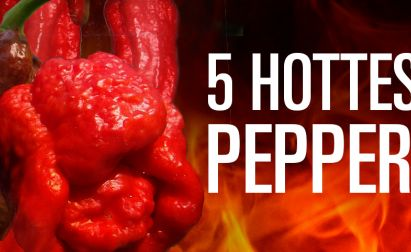 HOTTEST-PEPPERS-COVER