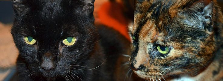 Cats for Adoption: 15-year olds Greta and Stash Have Been Adopted!