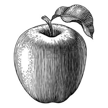 Engraved illustration of an apple  Vector photo