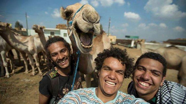 """Tre amici felici. E con loro un cammello, altrettanto """"happy"""". L'inconsueta espressione del mammifero, che sembra voler sorridere alla fotocamera insieme al trio, ha conquistato il web, in particolare la community di Reddit. E' un immagine curiosa, questa, che si aggiunge ad altre - molto"""