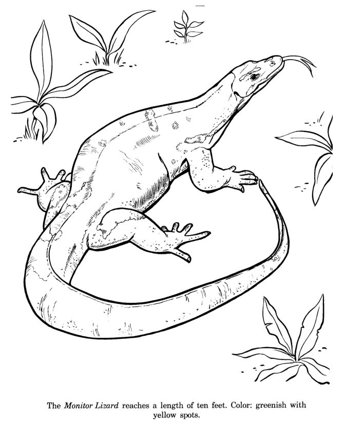 Monitor Lizard Drawing And Coloring Page
