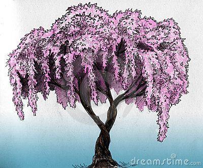 sakura cherry plum of apple tree in blossom pencil