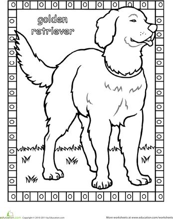 find this pin and more on coloring pages animals color the golden retriever