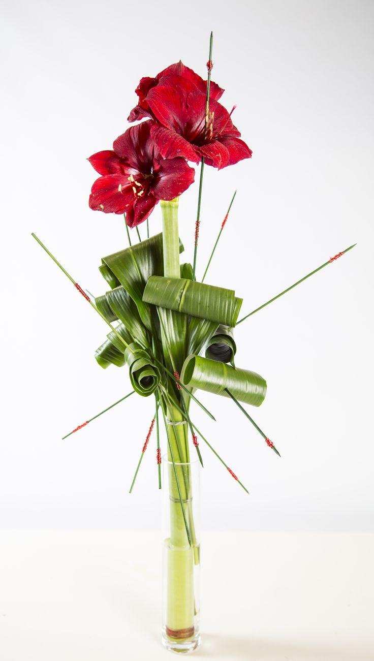146 best images about amaryllis on pinterest for Amaryllis christmas decoration