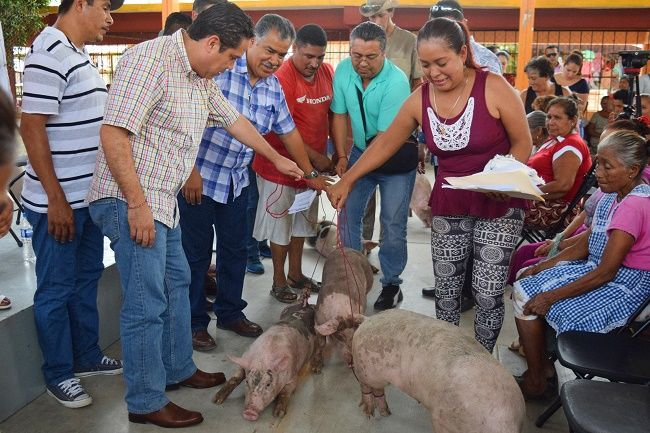 Entrega ganado porcino a habitantes del Sol - http://www.notimundo.com.mx/entrega-ganado/