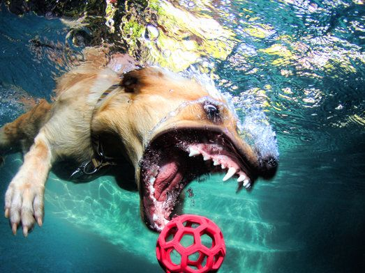 diving dogs underwater photos | these-images-of-dogs-diving-underwater-are-terrifying-and-bewitching ...