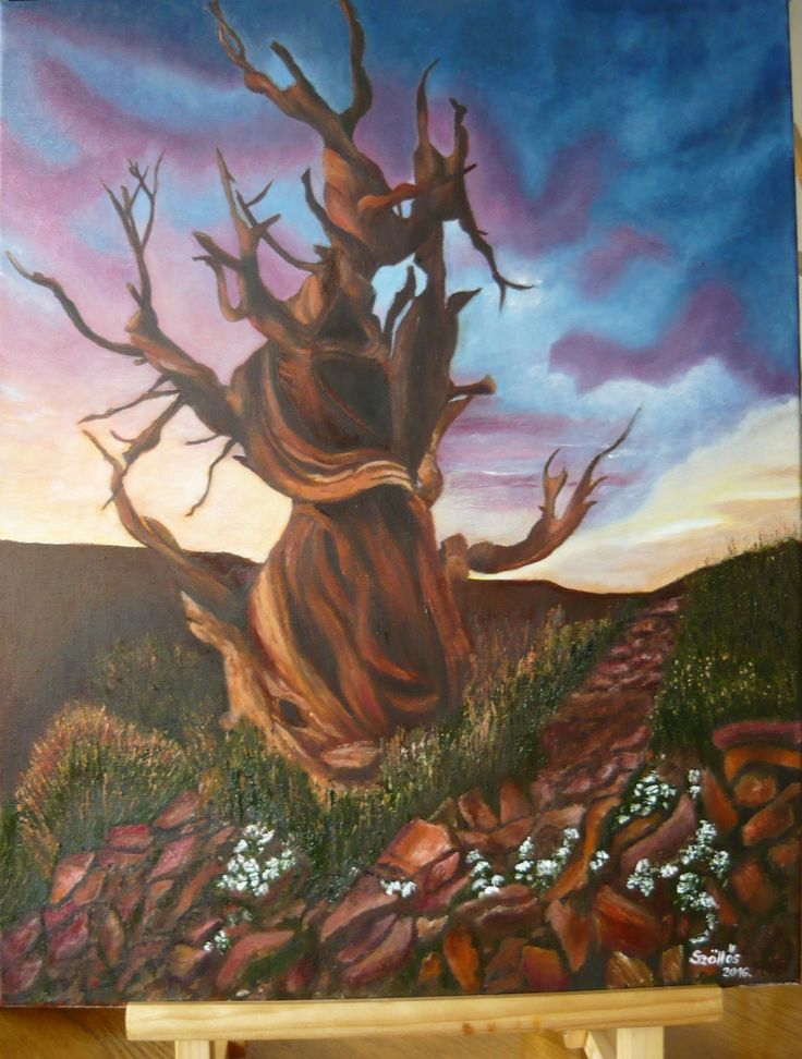 "created by: Kovácsné Sz. Éva -""Methuselah"" oil, 40x50 cm canvas (At 4,841 years old, this ancient bristlecone pine is the oldest known non-clonal organism on Earth. Located in the White Mountains of California, in Inyo National Forest, Methuselah's exact location is kept a close secret in order to protect it from the public.) (original photo:designtaxi.com)"