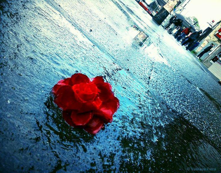 Rose; Street; Rain; Prague floods   © Petra Vaskova