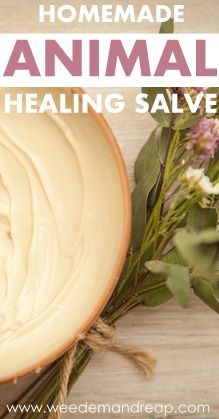 Homemade Animal Healing Salve - Weed'em & Reap