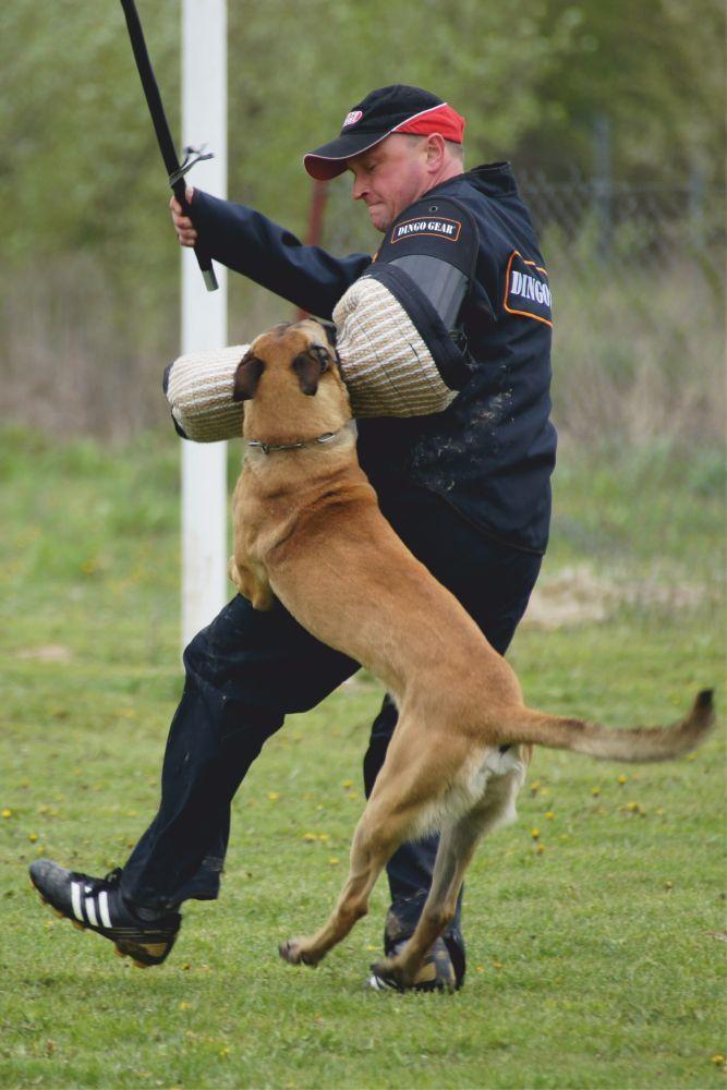 Dog Care And Training Tips Dogtrainingomaha 1812599645