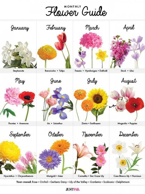Flowers Of The Month Birth Month Flowers Pictures Best 8 Birth Month Flower Tattoos Birth Month Flowers Birthday Month Flowers May Birth Flowers