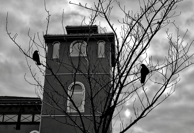 Crows and Architecture in New Westminster, B.C. Click image to enlarge.
