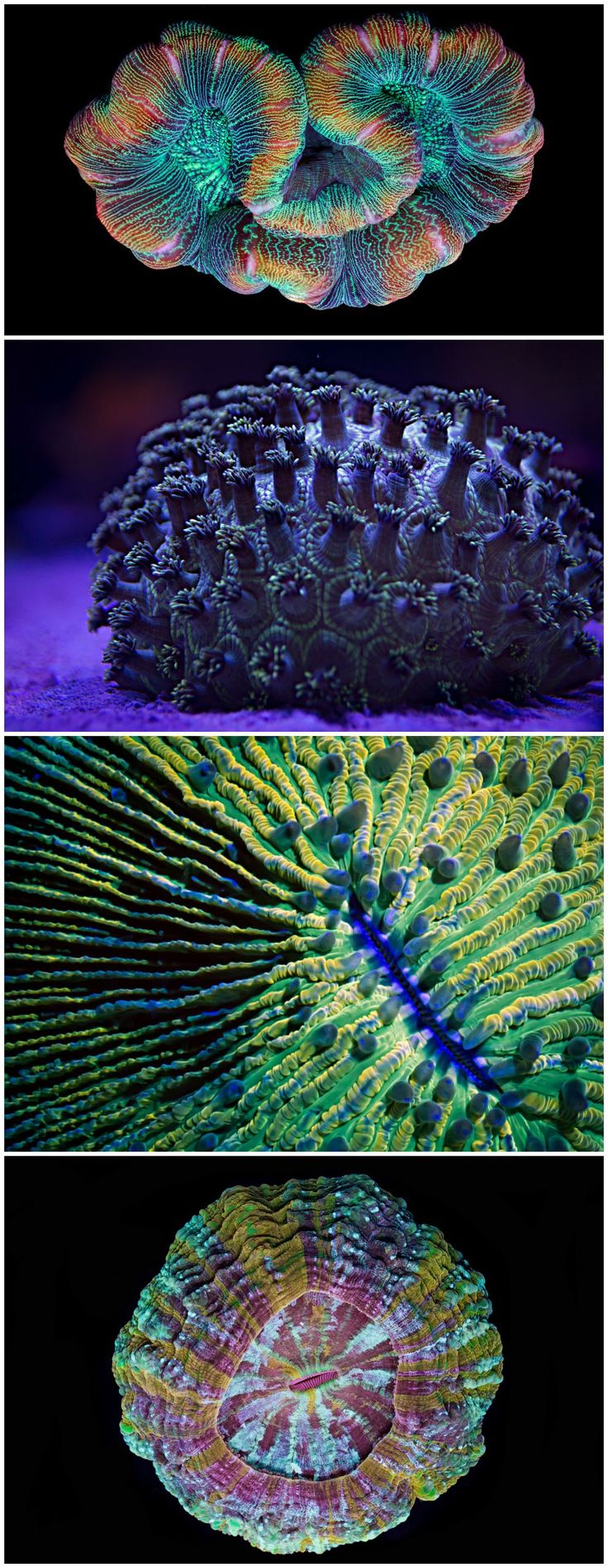 'Coral Colors' showcases the psychedelic beauty of marine invertebrates.