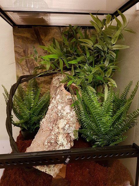 Best 25 Gecko Terrarium Ideas On Pinterest Reptile