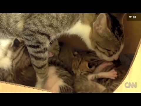 So cute- a Squirrel adopted by a mother cat  ...and it purrs in the end lol