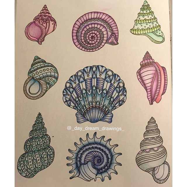 Here is all the seashells from the book #dagdrömmar @_day_dream_drawings_#seashell #drawing