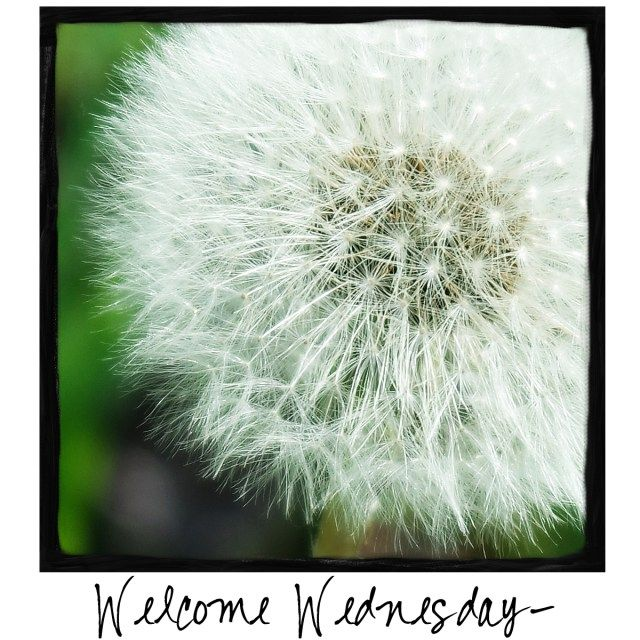 Welcome Wednesday! Come by and check out A Warm Hello!