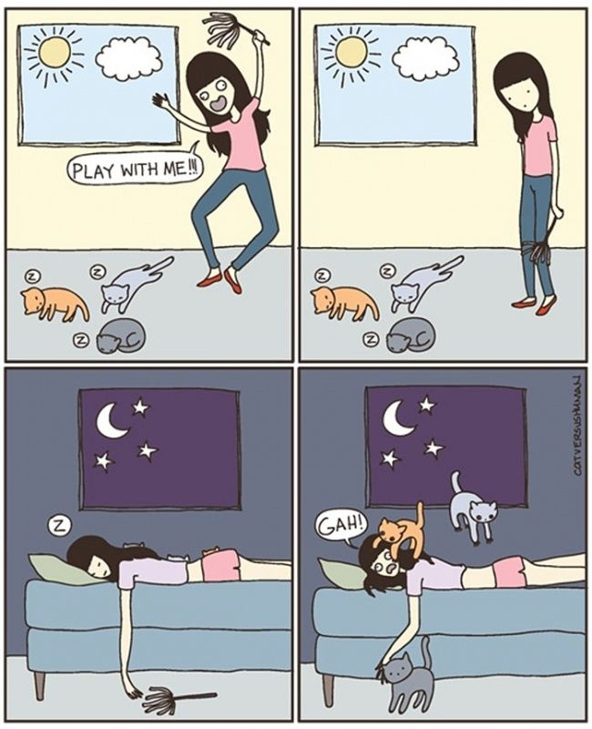 15 Hilarious Comic Strips Every Cat Owner Will Understand