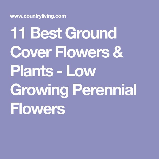 11 Best Ground Cover Flowers & Plants - Low Growing Perennial Flowers