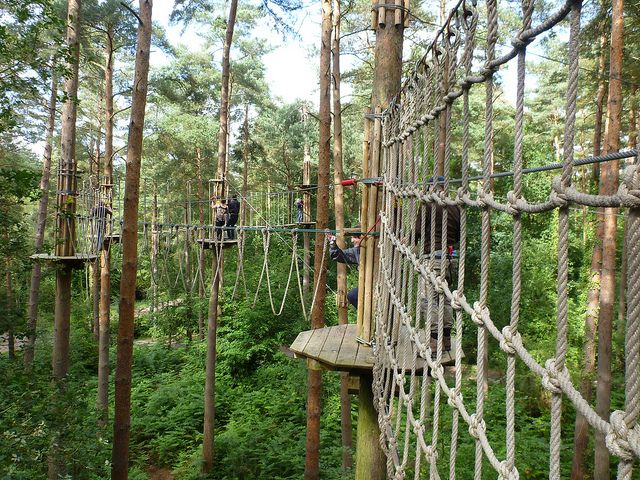 Go Ape Tree Top Obstacle Course At Alice Holt Forest In