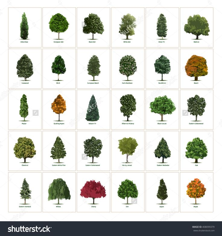 29 best trees images on pinterest plants botanical for Different types of plants and trees