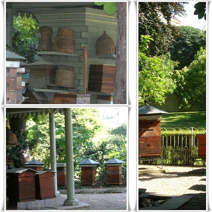 """Jardin du Luxembourg avec son rucher installé à Paris avant la mode des abeilles en ville et des ruchers """"Sentinelle de l'environnement"""""""