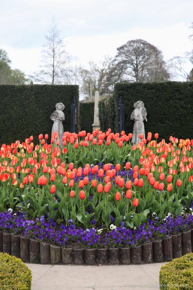 Tulips at Hever Castle in Kent, England.