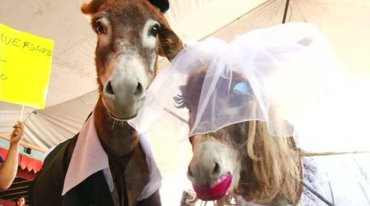 http://adil123.com/national-festival-donkeys-mexico/  National Festival of donkeys in Mexico