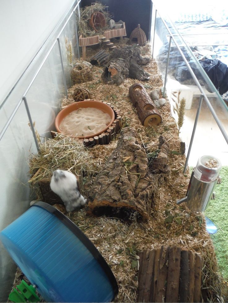 Pets Home Page 771 Of 864 Proud Of Your Hamsters Cage Posted In Supplies Accessories Moo Bear Now Has A 4ft Tank Instead Of Her 4ft Wooden Cage