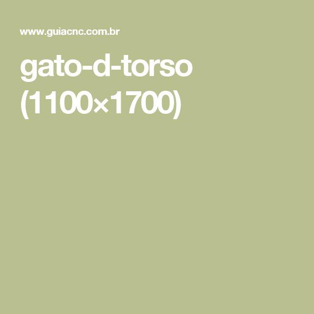 gato-d-torso (1100×1700)