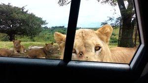 Nope safari