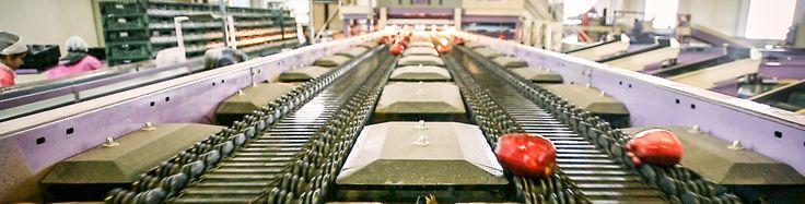 La produzione delle #mele più #sane e con il più totale rispetto dell' #ambiente|!