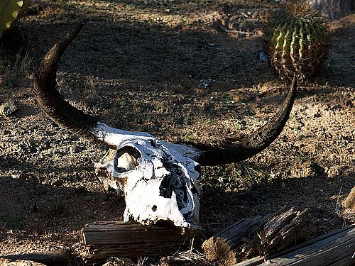 Download 87 best cow skulls images on Pinterest | Skulls, Bull ...