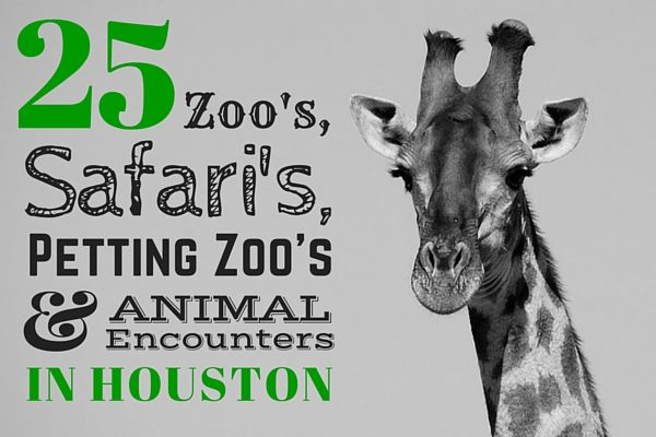 wildlife and zoos places animals can be seen Unlike most editing & proofreading services, we edit for everything: grammar, spelling, punctuation, idea flow, sentence structure, & more get started now.