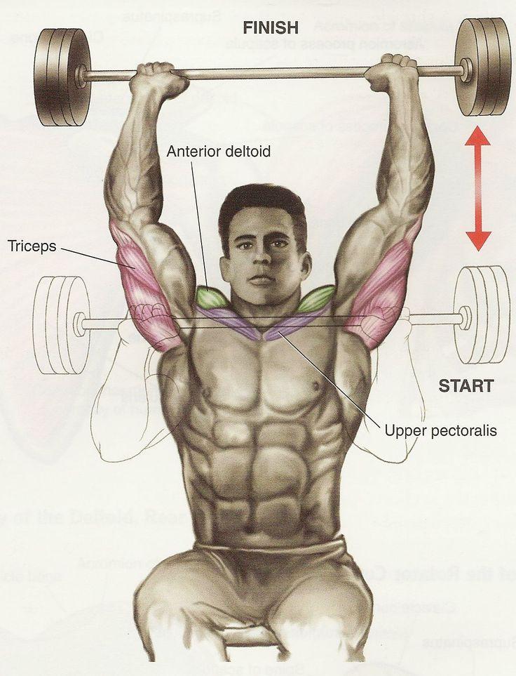 Ejercicios de hombros – Shoulder press con pesas de barra