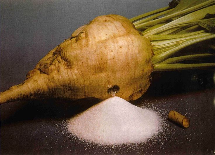 Sugar beet (beta vulgaris) has a conical, white, fleshy root that contains a high concentration of sucrose. This sugar content is extracted from the finely sliced beet into a water solution, producing useful byproducts of molasses and an insoluble pulp that's used as a livestock fodder. The resultant sugar is not considered to be of the same quality or fine flavour as that extracted from sugarcane, but it has the benefit of being easy to produce in a temperate climate. Annual. Zone 4-8