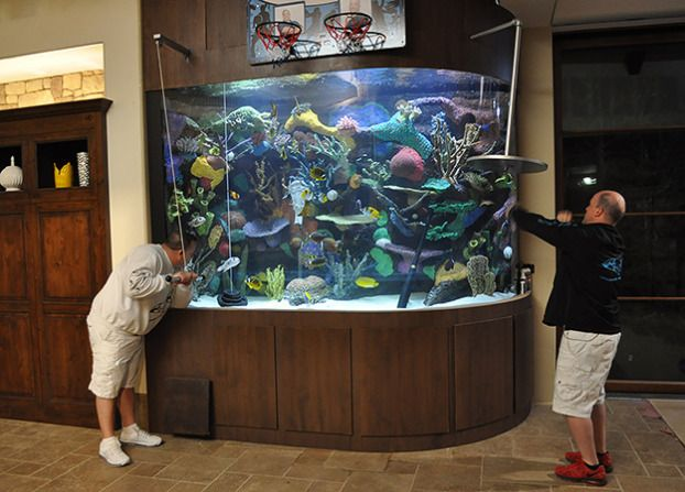Best 79 tanked aquariumns awesome images on pinterest for Fish store las vegas