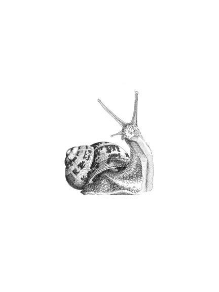 Hand Drawn Botanical Snail
