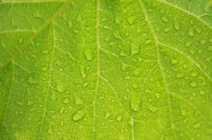 Plantas para clima lluvioso