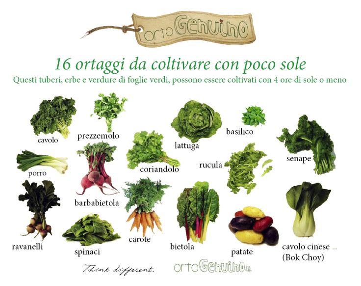 Hai poco sole nel tuo giardino? Ecco 16 tipi di ortaggi che hanno bisogno di meno di 4 ore di luce diretta. Piantali in una zona ombreggiata del tuo giardino e lascia la parte più soleggiata per i pomodori!!