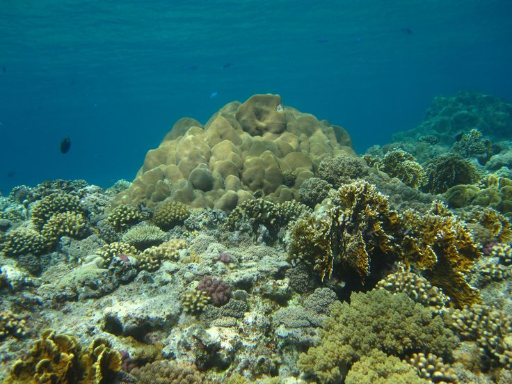 Healthy Daedalus Reef in Red Sea