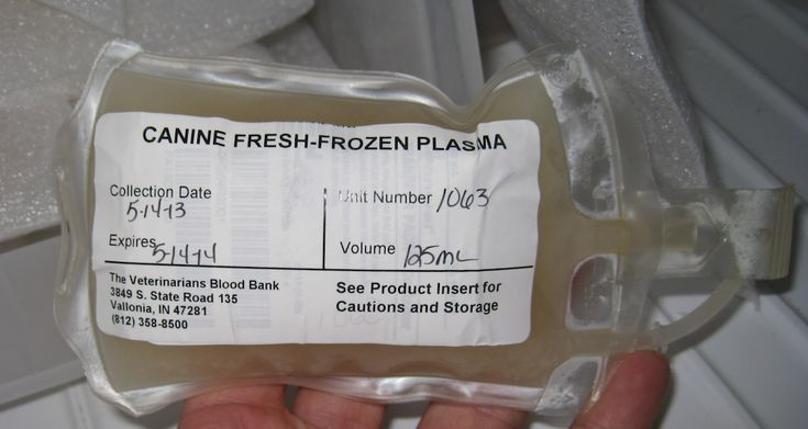 In this VETgirl online veterinary continuing education (CE) blog, we review the use of fresh frozen plasma (FFP) in the treatment of pancreatitis in dogs.