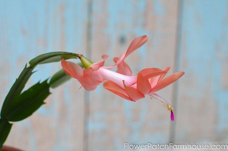 how to take hydrangea cuttings