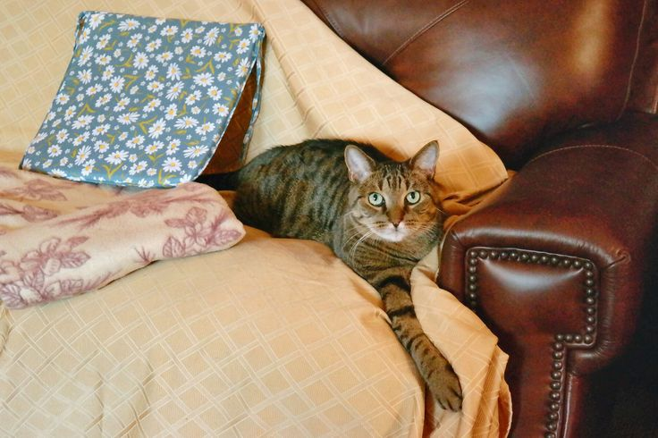 How to Cover a Leather Sofa for Pet Use
