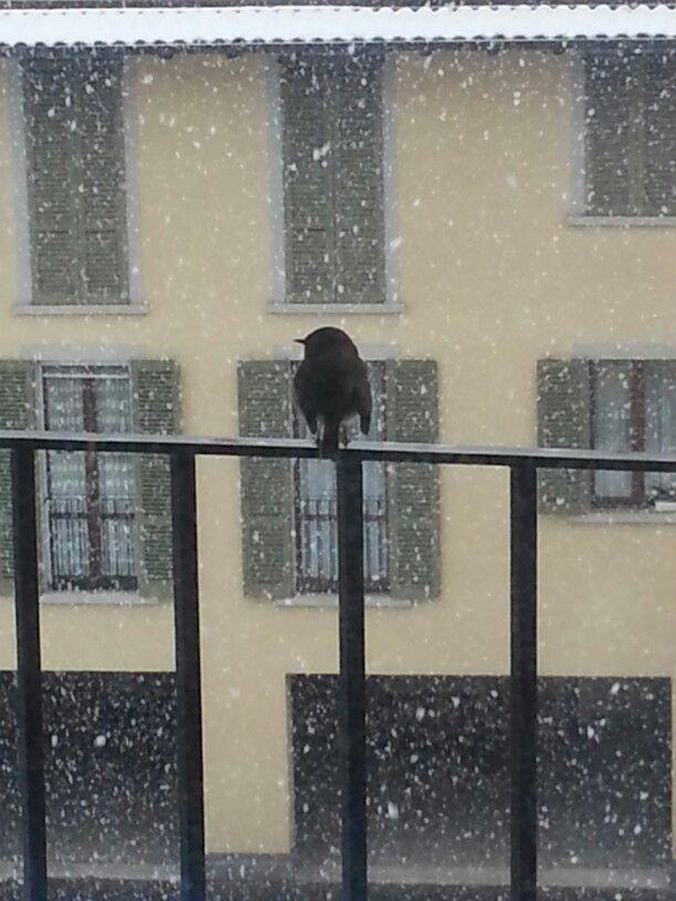 La neve e l'uccellino