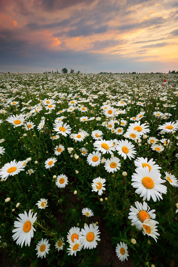Landscape Photography Flowers Landscape Photography Flowers Landschaftsfotografie In 2020 Summer Nature Photography Nature Photography Flowers Nature Photography